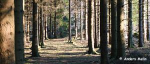 skog_AMelin_3207